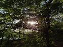 Slunce proráží mladými buky až na bývalé nádvoří hradu Oheb.