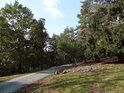 Zbytky po pokáceném stromu u zpevněné cesty.