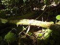Sluneční světlo proniká do lesa na mnoha místech, však vidět se dá bezpočtem způsobů.