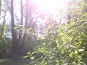 Když Slunce vehementně zasvítí do luhu, je to silný impuls pro růst rostlin, které sem patří i nepatří.