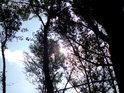 Slunce v horních patrech lužních topolů.