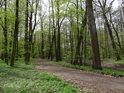 Lužní cesta kolem slepého ramene přes Panenský les.