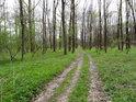 Cesta přes luh, Panenský les.