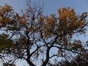 Podzim doslova voní barvami.