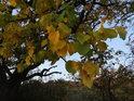 Listy podzimem mění barvy od zelené přes žlutou, oranžovou a tak dál.