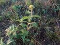 Pro některé rostliny jakoby s podzimem žádný vegetační klid nenastupoval.