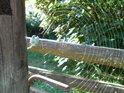 Pavoučí síť na kozí ohradě upevněná, slunečními paprsky prozářená.
