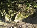 Kořání si hledá cestu i po kamenech.