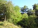 Křovinatá část chráněného území v jeho východní části.