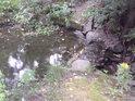 Přívodní potůček do rybníka v Pavlově.