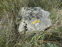Na osamělém kameni tvoří oživující barvy lišejníky.