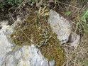 Mech přepůlil kámen na Pazderně.