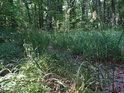 Lesní pěšina travou.