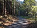 Prosvětlená asfaltová lesní cesta podél Olešenky.