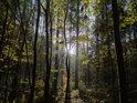 Střední patro podzimního lesa v Pekle.
