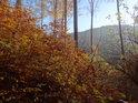 Fantastické bukové křoví v barvách podzimu.