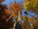 Kouzelný podzimní bukový les s ojedinělým smrkem.