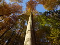 Podzim je kouzelné období, o to více v bukovém lese přímo v Pekle.