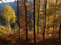 Žlutavé bukové listí v Slunci a vzadu pak temná smrková zeleň ve stínu.