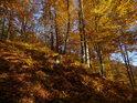 Podzimní bukový svah.