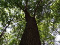 Husté stromoví chrání poutníka před prudkým Sluncem.