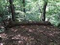 Trouchnivějící kláda tvoří jakousi přirozenou zábranu nad prudkým svahem.