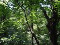 Ze svahu vidíme do korun stromů aniž potřebujeme zaklánět hlavu.