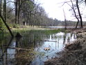 Jarně vodní zátiší u rybníka Pětinoha.