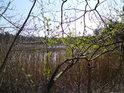 Severní břeh rybníka Pětinoha je poměrně nepřístupný.