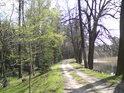 Oblouk hráze rybníka Pětinoha ve své jižní části.
