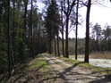 Hráz rybníka Pětinoha na jihu přechází v lesní cestu, která dále míří mimo jiné i k zabité ženě.