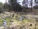 Malá mokřadní oblast při jižním břehu rybníka Pětinoha.
