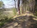 Lesní cesta od jihu k rybníku Pětinoha.