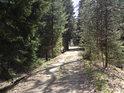 Lesní cesta od rybníka Pětinoha stoupá na jih.