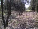 Lesní výsek na sever od rybníka Pětinoha podél lesní stružky.