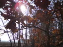 Zimní dub poskytne úžasný filtr na Slunce.