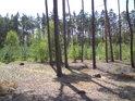 Pohled od přesypu na jih, kde se nachází sázený bor.
