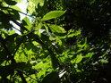 Sluncem zalité bezové listy.
