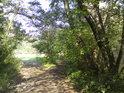 Cesta v jižní části chráněného území.