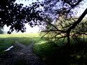 Krásná nivní louka pohledem z pod vrb.