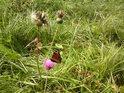 Babočky patří k našim nejkrásnějším motýlům.
