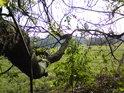 Pohled na Plané loučky od lesa.