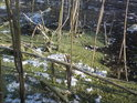 Zamrzlý žabinec čeká na jaro, aby zcela pokryl hladinu slepého ramene.