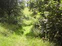 Pěšina po jižní hranici chráněného území.