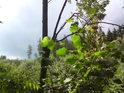 Pohled na protilehlý les přes jeřáb.