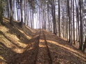 Havířská úzkokolejka tiše protíná les.