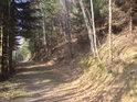 Vede tu poměrně dost lesních cest.