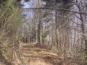 Lesní ohrada chrání cestu shora, svoji školkovou funkci již jistě neplní.