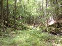 Zalesněné údolí horského potoka.