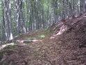Řídce používaná lesní cesta v prudkém svahu.